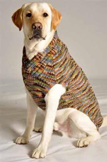 Dog Sweaters Benefits On Why To Buy Them Careyfashioncom