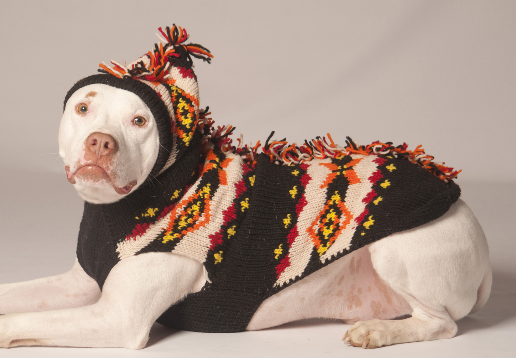 Dog Sweaters – Benefits on Why To Buy Them